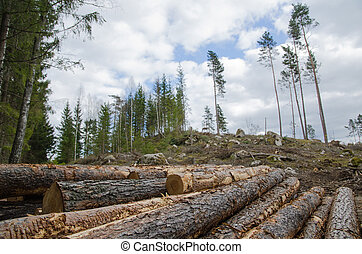 Logpile at a clear cut area - Closeup of a logpile with a...
