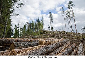 Logpile at a clear cut area - Closeup of a logpile with a...