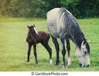 Newborn baby horse with mother on the green grass