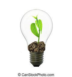 pequeño, planta, luz, bombilla