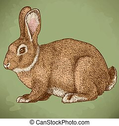 vector engraving rabbit in color - vector illustration of...