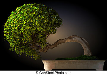 Bonsai tree side view with a black color gradient background...