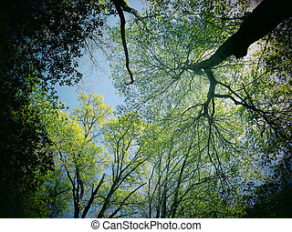 Spring Forest Canopy - A filtered photo background of spring...