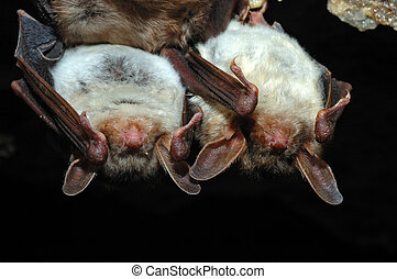Bat Cave - Bat in their natural habitat