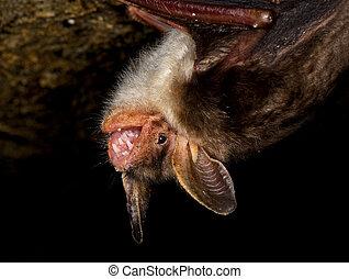 Murciélago, Cueva