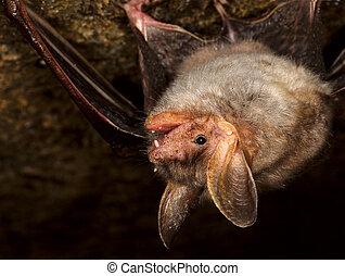 Bat Cave - Bat in their natural habitat