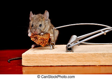 Mouse lunch with life-threatening