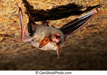 Bat cave - Bat in the cave to the stone trailer