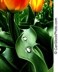 Garden Plants Flowers with Rain Drops