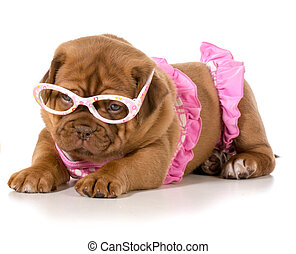 dog in bikini - dogue de bordeaux wearing pink bikini and...