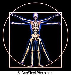 Vitruvian man with bones concept.