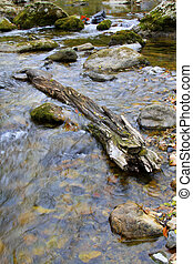 rotten wood in streams - rotten wood in streams, closeup of...
