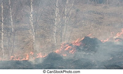 Wildfire - In the forest is burning dry grass