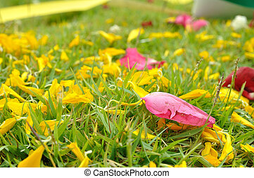 Rose and flower petal on green grasses