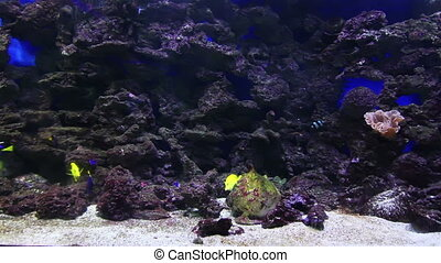 A large aquarium in the basement of - Colorful aquarium fish...