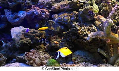 Aquarium fish and shell - Colorful aquarium fish. Clean...