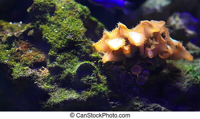 Aquarium plants - Colorful aquarium fish Clean environment...
