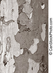Eucalyptus tree closeup of background and texture BW...