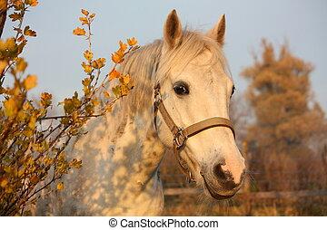 lindo, gris, poney, retrato, prado