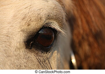 Close up of palomino horse eye on sky background