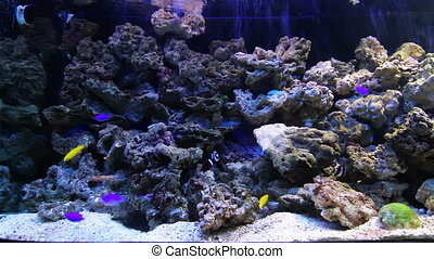 Aquarium with small fish - Colorful aquarium fish Clean...