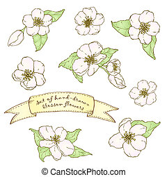 Set of hand drawn apple flowers - Set of hand drawn apple...
