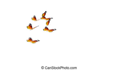 orange butterflies - many butterflies flying arround with...