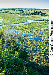 Pantanal wetland, Brazil - Elevated view of Pantanal...