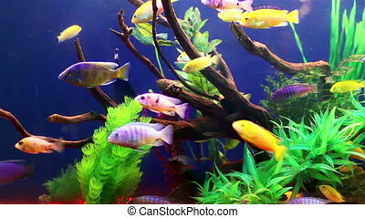 Colored aquarium fish - Colorful aquarium fish Clean...