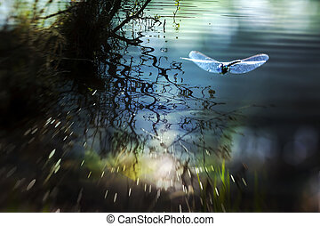 A Beautiful Dream - A dragonfly by a summer pond taken with...