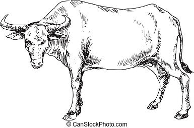 Pics For > Carabao Head Drawing