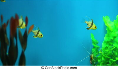 Multi-colored fish - Colorful aquarium fish Clean...