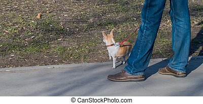 small dog standing near his masters feet