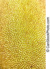 Closeup of jackfruit. This fruit is excellent vegetarian...