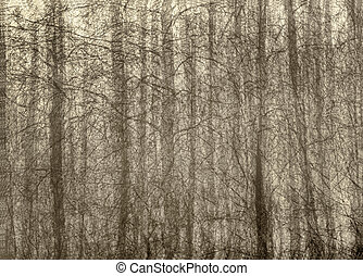 bare trees - Nature landscape of bare trees with in camera...