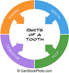 Parts of a Tooth Word Circle Concept scribbled with great...