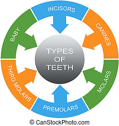 Types of Teeth Word Circles Concept