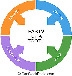 Parts of a Tooth Word Circle Concept with great terms such...