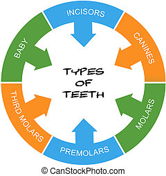Types of Teeth Word Circle Concept scribbled with great...