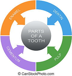 Parts of a Tooth Word Circles Concept with great terms such...