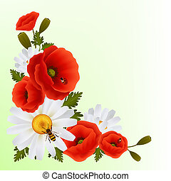 Poppy daisy background - Vibrant floral poppy flowers and...