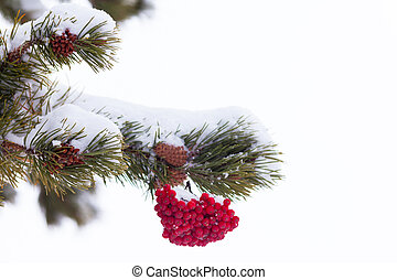 Red mountain ash berries Christmas tree decoration - Red...