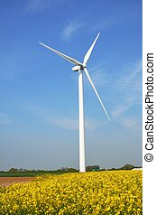 wind turbine on farm - wind turbine in rape field