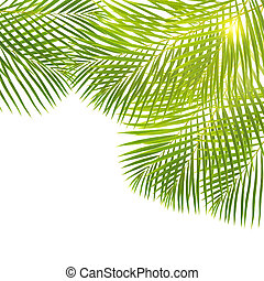 green palm leaves border - green palm leaves border isolated...