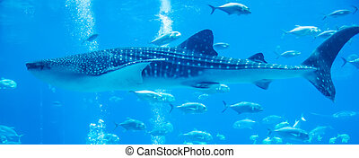 whale sharks swimming in aquarium with people observing
