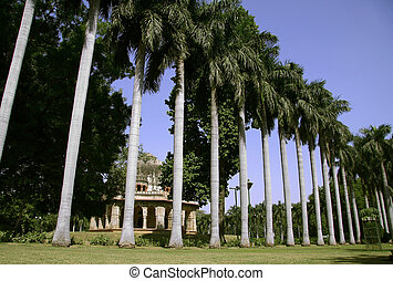 trees in delhi - silhouetted palm trees, lodhi gardens,...