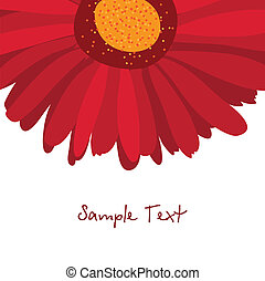 Burgundy red gerbera flower on a white background