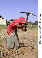 digging - village woman working in field, rajasthan, india