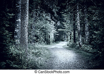Path in dark night forest - Path winding through dark moody...