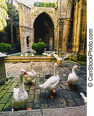 Cathedral in Barcelona - Geese inside of the Cathedral of...